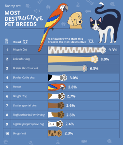 top ten most destructive pet breeds