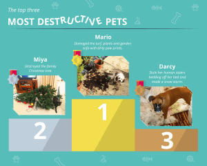 Top three destructive pet images as found from Good Move's competition